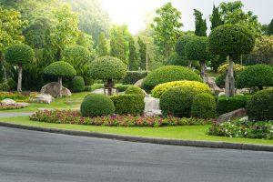 How to make your landscape look good san antonio